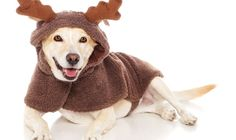 He looks so happy in his snuggly reindeer suit.