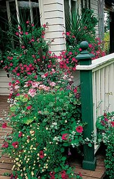 "Small-Space Butterfly Gardens  Containers of nectar-rich blooms attract ""flying flowers."""