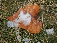 Aspen leaf with ice- Photo By Rhoda Ellen  Stevens Bounds