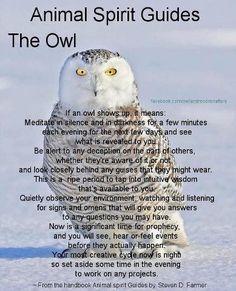 Animal Spirit Guide : The Owl. This is my animal spirit guide. A barn owl Spirit Animal Totem, Animal Spirit Guides, Magick, Witchcraft, Animal Medicine, Animal Symbolism, Animal Meanings, Power Animal, Animal Magic