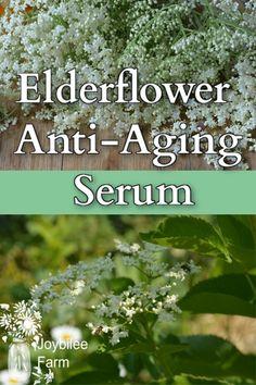 Elderflower Anti-aging Serum for Older Complexions Healing Herbs, Medicinal Plants, Natural Healing, Herbal Tinctures, Herbalism, Herbal Oil, Natural Health Remedies, Herbal Remedies, Natural Medicine