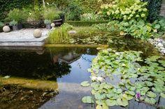 Garten H, Baden bei Wien | Landschaftsarchitektur Schmidt Rennhofer Schmidt, Aquarium, Landscape Diagram, Bathing, Goldfish Bowl, Aquarium Fish Tank, Aquarius, Fish Tank