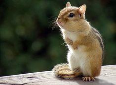 20 pequeños animales dan la bienvenida a la Primavera | Schnauzi.com