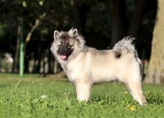 The Trendiest Dog Breeds to Own | PetBreeds