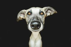 Absurdly Expressive Dog Portraits by Elke Vogelsang  http://www.thisiscolossal.com/2014/03/absurdly-expressive-dog-portraits-by-elke-vogelsang/
