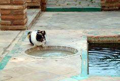 pilones y aljibes de granada: Un gatito mu salao en la alberca de la casa nazari...