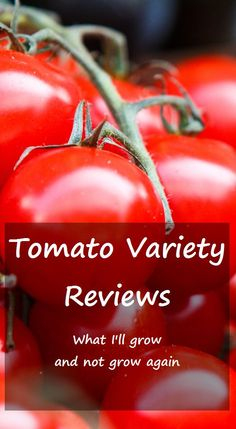 Reviews of tomato varieties I've grown and am growing. Some old and new favorites and a never-again variety.