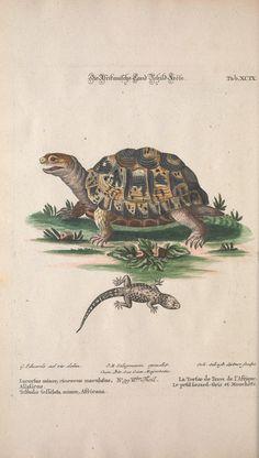 Recueil de divers oiseaux étrangers et peu communs. (Uniform: Sammlung verschiedener ausländischer und seltener Vögel). By Huth, Georg Leonhart, 1705-1761 - Biodiversity Heritage Library