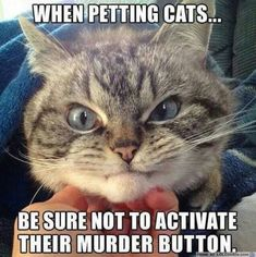 Cause cats go from super sweet to mad crazy in seconds! The joy of being a cat parent is hilariously fun!  Ready to adopt your next Fur Baby? #cats #catmemesevil #funnymeme #adoptdontshop #catlovers Funny Dog Captions, Funny Animals With Captions, Funny Baby Memes, Funny Cat Videos, Funny Babies, Cat Memes, Funny Dogs, Funny Quotes, Funny Kittens