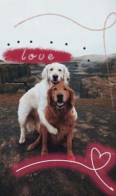 Cool Instagram, Creative Instagram Stories, Instagram And Snapchat, Instagram Story Ideas, Big Dog Little Dog, Dog Stories, Dog Wallpaper, Insta Photo Ideas, Photo Story