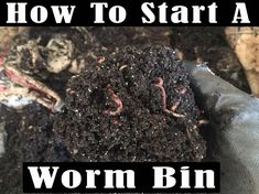 How to start a Worm bin for your garden, best organic compost for your plants, I give you a step by step way of making a cheap worm bin. Organic Compost, Organic Gardening Tips, Bokashi, Seed Germination, Starting A Garden, Seed Starting, Coffee Uses, Worm Composting, Compost Tea