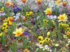 blomster - Google-søk