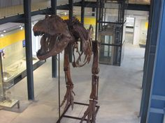 PAS Martel  Tirannosaurus Rex