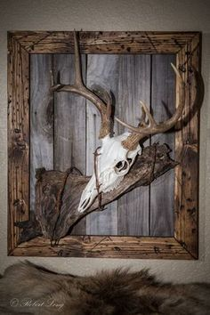 Antlers are woodland-inspired cool rustic pieces that bring coziness. Antlers make accessory holders and natural jewelry hangers. You can add some décor with diy decoration ideas using antler. Deer Hunting Decor, Deer Decor, Deer Horns Decor, Antler Decorations, Decorating With Deer Antlers, Hunting Rooms, Antler Centerpiece, Hunting Art, Hunting Stuff