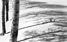 Abbas Kiarostami, Snow Series, black and white photograph, 57 x 90cm, edition of 5