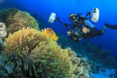 Ocean Action: Dive on the EDGE to Save Corals in Little Cayman