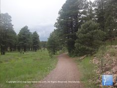 Peaceful ponderosa pine forest lining the trails at Fort Tuthill County Park in Flagstaff #Arizona #nature Summer of 2015.
