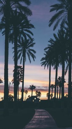 Evening with palm trees. evening with palm trees summer wallpaper phone, iphone wallpaper travel Summer Wallpaper, Tree Wallpaper, Wallpaper Backgrounds, Iphone Wallpaper, Nature Wallpaper, Beautiful Wallpaper, Print Wallpaper, Pretty Pictures, Cute Wallpapers