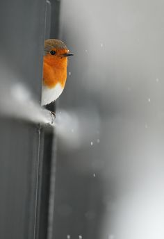 ❄ Nice shot of one of my dearest feathered friends