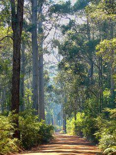 Forest Road in Manjimup, Western Australia