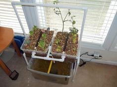 Apartment / Indoor Aquaponics System by Renewable DIY, via Kickstarter.