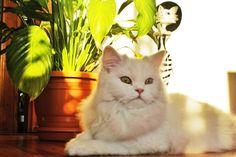 Cool cat lady Sheila