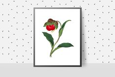 Vintage Flowers, Red Flowers, Floral Wall Art, Floral Prints, Romantic Artwork, Printable Art, Printables, Artwork For Home, Vintage Wall Art