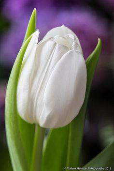 Danielle's favorite flower.
