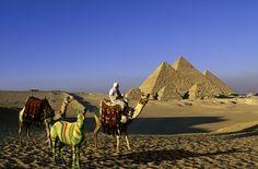 Le zèbre en Egypte