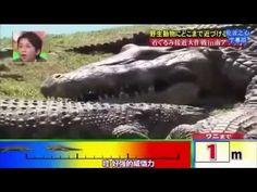 Funny Japanese Pranks Humans vs Crocodile ( Engsub )   Funny Japanese TV Show