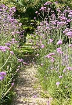 verbena-lined path. Jardins de Roquelin (NB: plant next to steps? Meadow Garden, Dream Garden, Verbena, Garden Paths, Garden Landscaping, Landscaping Ideas, My Secret Garden, Plantation, Garden Styles