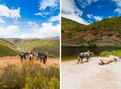 Probably my favourite moment of the trip- reaching the viewpoint over the Kouga River and then swimming with the horses when we reached the sandy riverbanks, after their spontaneous rolling in the deep sand.