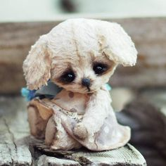 Doggy Stesha by By Lyubov Kayutkina   Bear Pile