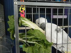 Simple Ways To Make Food More Interesting To Parrots