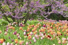 size: Photographic Print: Blooming Garden by Frank Lukasseck : Ranger, Garden S, Wrap, Custom Framing, Framed Artwork, Find Art, Floral Arrangements, Bloom, Around The Worlds