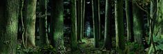 forest scene, eish, need to find these people's names to credit them...