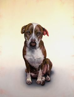 Dog Portraits & Paintings by Dana Hawk - ...BTW,Please Check this out: http://artcaffeine.imobileappsys.com