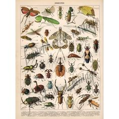 Planche Insectes 01