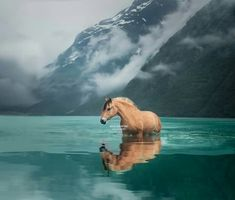 Very interesting. I did not know that horses went in water. Very interesting. I did not know that horses went in water. - Art Of Equitation All The Pretty Horses, Beautiful Horses, Animals Beautiful, Cute Horses, Horse Love, Equine Photography, Animal Photography, Horse Pictures, Animal Pictures