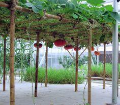 bigstock-Hydroponics-Greenhouse-323331