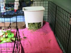 Guinea Pig Hay Feeder made out of trash can/bucket. Good idea for bunny too Pet Guinea Pigs, Guinea Pig Care, Diy Hay Feeder, Guinie Pig, Bunny Cages, Raising Rabbits, Rabbit Hutches, Pet Cage, Pet Rabbit