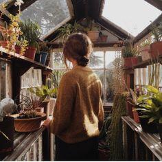 Cute little Greenhouse