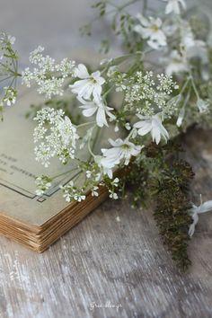 Livre et fleurs des champs