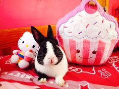 Oreo the bunny and his friends
