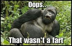 We have a cool fart meme collection to share with you which you can also share friends and relatives. So, go ahead, scroll down, and enjoy today's memes. Fart Humor, Funny Animal Quotes, Animal Memes, Funny Animals, Animal Sayings, Animal Humor, Funny Quotes, Cute Animal Pictures, Gorilla Gorilla