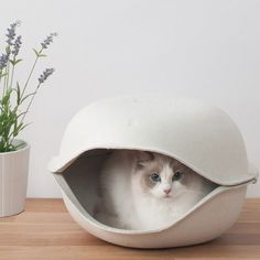 """From Oppo, the makers of the incredible Dog Muzzle Quack, now comes something for your feline friend. The Cat Shell is both a bed and hideaway, giving your pet a place to snuggle up and doze in style. With its pulp materials, the """"shell"""" has a homely, gentle ambience that will fit in within any domestic environment.Easy to clean and keep hygienic, you can either get a single or double shell. The double allows you to have either two small cats sleep in a kind of """"bunk bed""""..."""