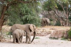 DEMAND NAMIBIA STOP ISSUING HUNTING LICENSES!  The government has issued 9 hunting licenses to kill desert elephants. With only 100! of these elephants remaining in Africa, animal conservationists are outraged that the government could even consider killing these creatures. These animals already live in a harsh and brutal region, and adding hunters to the mix will only place them closer to extinction. PLZ SIGN AND SHARE!