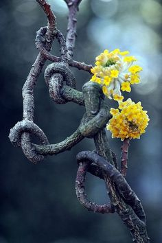 Source: momentary mood  (knots…i would do this to other plants!)