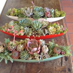 Succulent boats from Fresh Dirt (Sunset)