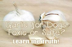 The use of garlic and garlic products with dogs has come under (internet) fire the last few years, but which is true: Garlic is Safe for Dogs or Garlic is Toxic for dogs- here's the answer!